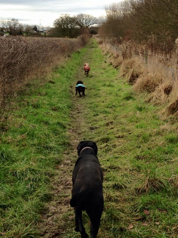 Group Dog Walks in Barton